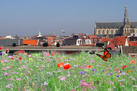 DeDAKKAS Haarlem 5